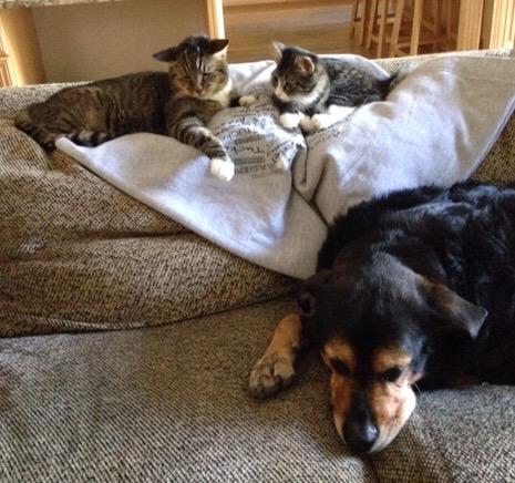 cats & dog