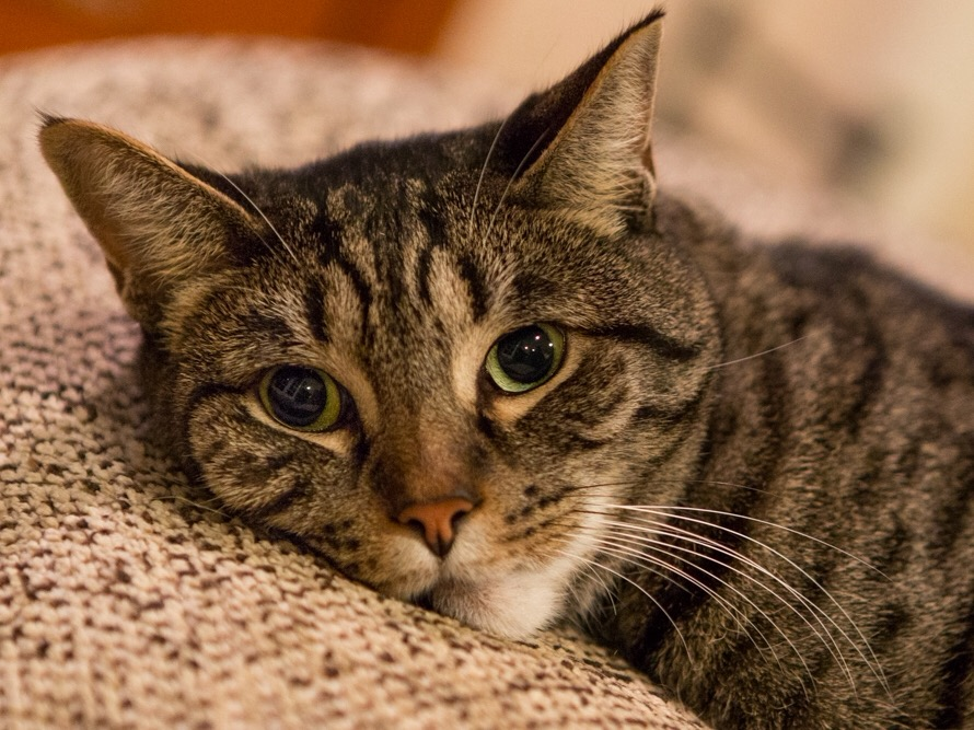 Natural Treatment For Gas In Cats